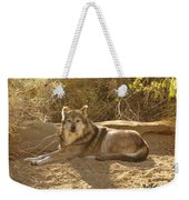 Mexican Wolf Close Up Weekender Tote Bag