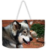 Miley The Husky With Blue And Brown Eyes Weekender Tote Bag by Doc Braham