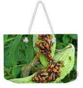 Milkweed Bug Nymphs - Oncopeltus Fasciatus Weekender Tote Bag
