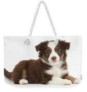 Miniature American Shepherd Puppies Weekender Tote Bag