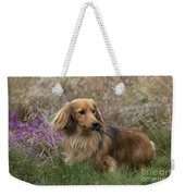 Miniature Long-haired Dachshund Weekender Tote Bag