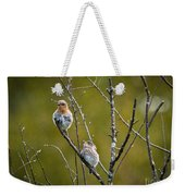 Momma Bluebird And Baby Weekender Tote Bag
