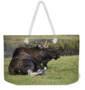 Moose At Rest Weekender Tote Bag