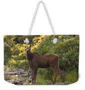 Moose Baby Sniffing Morning Air Weekender Tote Bag