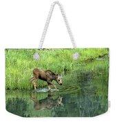 Moose Calf Testing The Water Weekender Tote Bag