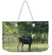 New Hampshire Grazing Cow Moose  Weekender Tote Bag