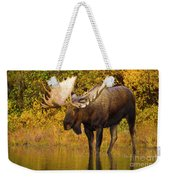 Moose In Glacial Kettle Pond  Weekender Tote Bag