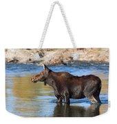 Moose On The  Gros Ventre River Weekender Tote Bag