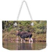 Moose_0591b Weekender Tote Bag