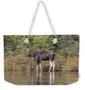 Moose_0596 Weekender Tote Bag