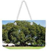 Moreton Fig Tree In Santa Barbara Weekender Tote Bag