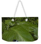 Morpho Butterfly In Rainforest Ecuador Weekender Tote Bag