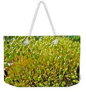 Moss And Fruiting Bodies - Green Lane Pa Weekender Tote Bag