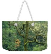 Moss Covered Tree Central California Weekender Tote Bag