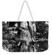 Moss On The Evergreens II In Black And White Weekender Tote Bag