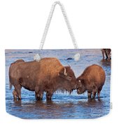 Mother And Calf Bison In The Lamar River In Yellowstone National Park Weekender Tote Bag