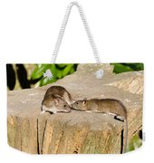 Mother Rat With Youngster Weekender Tote Bag