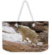 Mountain Goat On Snowfield On Mount Evans Weekender Tote Bag