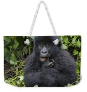 Mountain Gorilla Baby Chewing On Finger Weekender Tote Bag