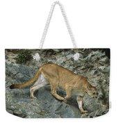 Mountain Lion Crossing Rocky Terrain Weekender Tote Bag