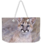 Mountain Lion Cub In Dry Grass Weekender Tote Bag