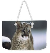 Mountain Lion Cub In Snow Montana Weekender Tote Bag