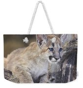 Mountain Lion Cub On Tree Branch Weekender Tote Bag
