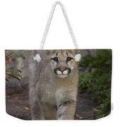 Mountain Lion Cub Walking Weekender Tote Bag