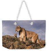Mountain Lions Felis Concolor Weekender Tote Bag