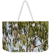 Mourning Doves Landing In Eucalyptus  Weekender Tote Bag