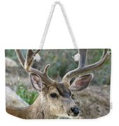 Mule Deer Buck In Velvet Weekender Tote Bag
