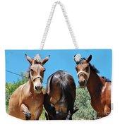 Mules On Alonissos Island Weekender Tote Bag