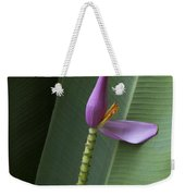 Musa Ornata - Pink Ornamental Banana Flower - Kepaniwai Maui Hawaii  Weekender Tote Bag