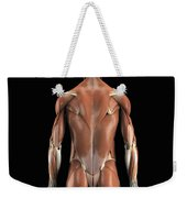 Muscles Of The Upper Body Rear Weekender Tote Bag