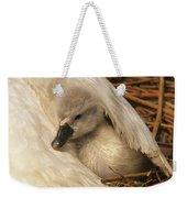 Mute Swan Cygnet Under Wing Weekender Tote Bag