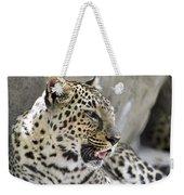 Naples Zoo - Leopard Relaxing 1 Weekender Tote Bag