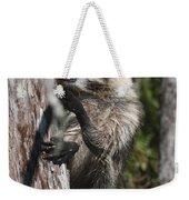 Nasty Raccoon In A Tree Weekender Tote Bag