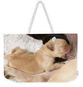 Newborn Labrador Puppy Suckling Weekender Tote Bag