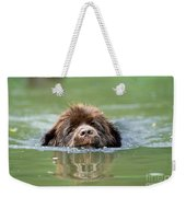 Newfoundland Dog, Swimming In River Weekender Tote Bag