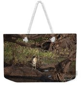 Night Heron At Corroboree Billabong Weekender Tote Bag
