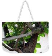 Nispero Tree Weekender Tote Bag