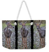 Curious Yearling Deer Weekender Tote Bag