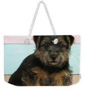 Norfolk Terrier Puppy Dog, Sitting Weekender Tote Bag