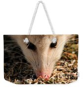 North American Opossum In Winter Weekender Tote Bag