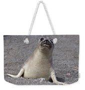 Northern Elephant Seal Weaner Weekender Tote Bag