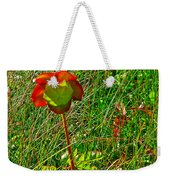 Northern Pitcher Plant In French Mountain Bog In Cape Breton Highlands-nova Scotia  Weekender Tote Bag