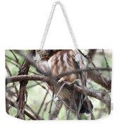 Northern Saw-whet Owl  Weekender Tote Bag