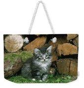 Norwegian Forest Kitten Weekender Tote Bag