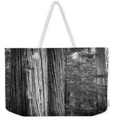 Old Growth Cedars Glacier National Park Bw Weekender Tote Bag