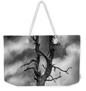Old Trees Reach For The Sky Weekender Tote Bag